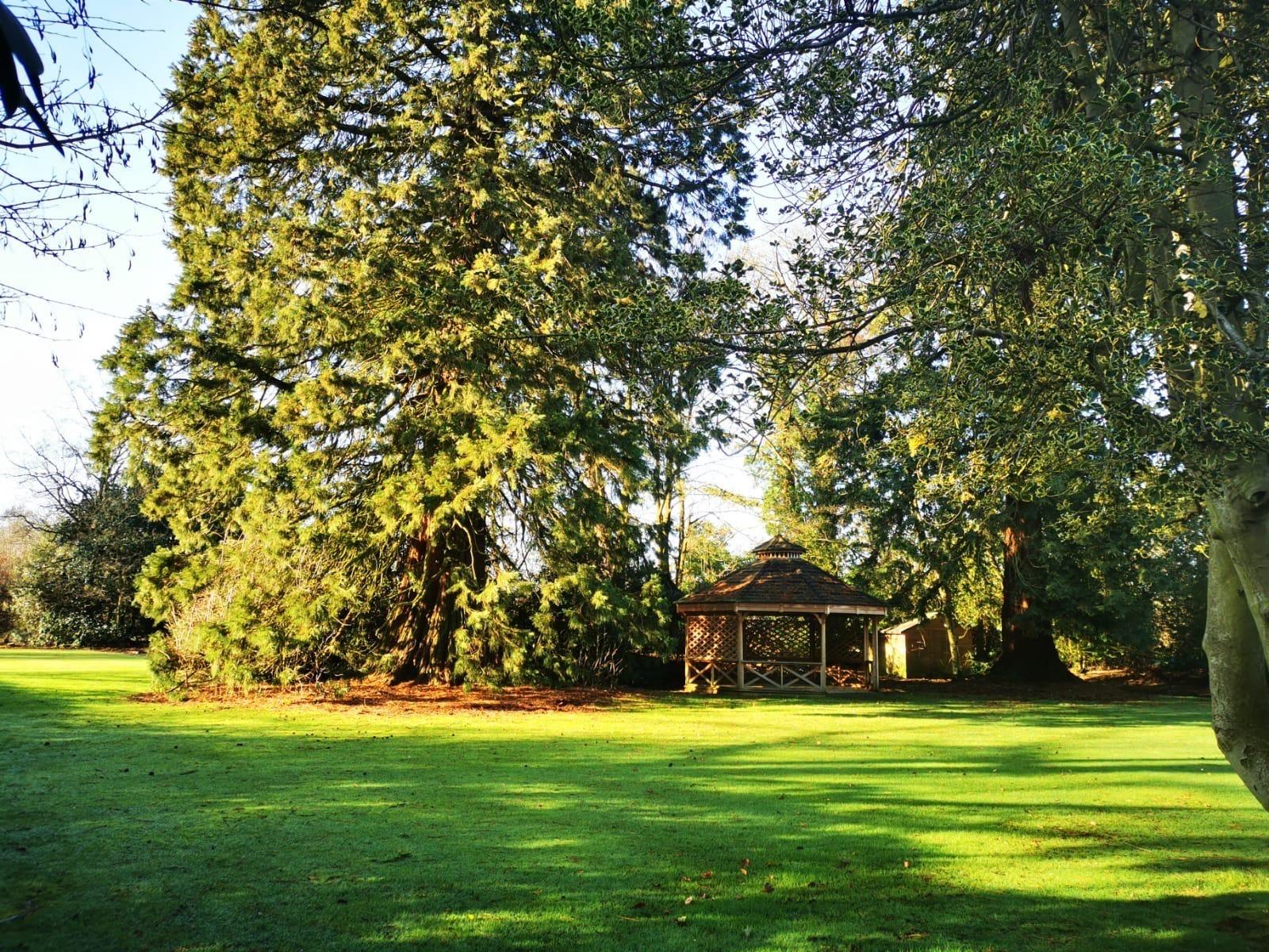 Sunny Woodside garden - our photo